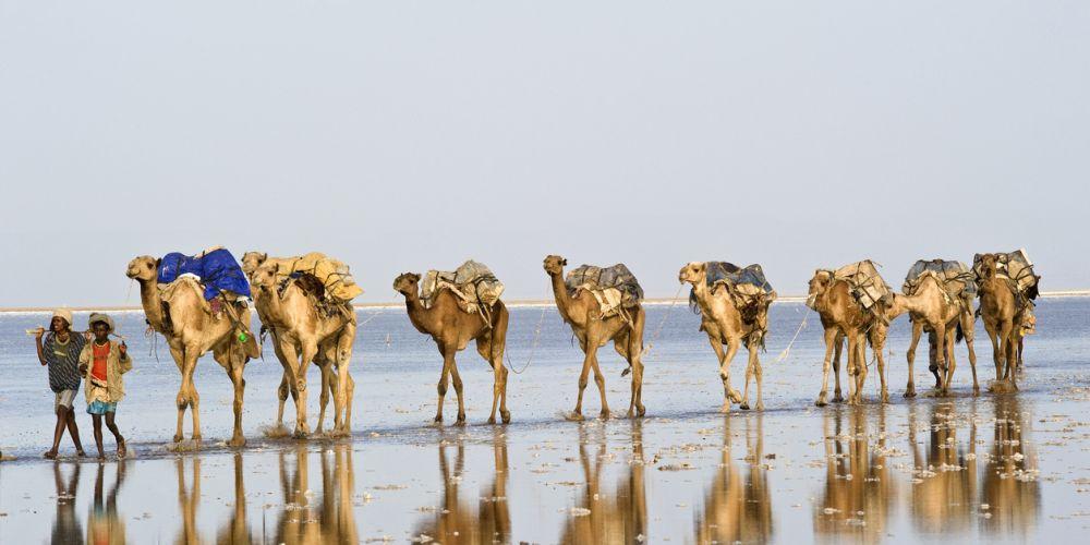 Верблюжья почта